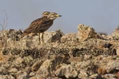 Fuerteventura Wildlife