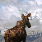 Moose at the Tetons - img_3540_2_w.jpg