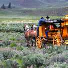 Yellowstone Horse and Carriage - img_4957_w.jpg