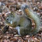 Squirrel - img_5191_w.jpg